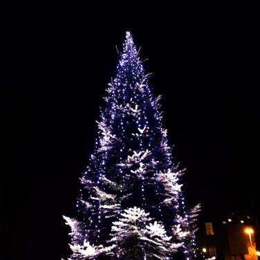Trinity Tree lights up, 5pm.